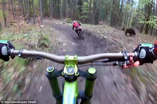 Oso persigue ciclista Eslovaquia