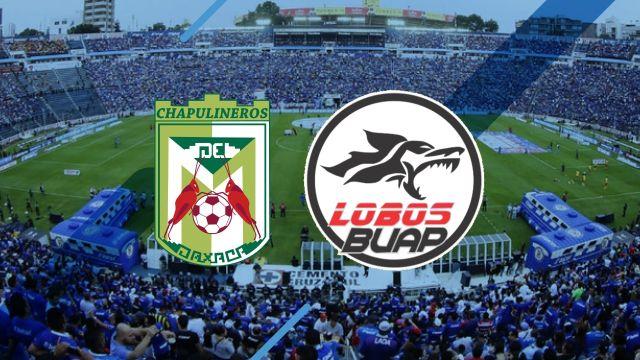 ¿Qué equipos forman parte de la Liga de Balompié Mexicano?