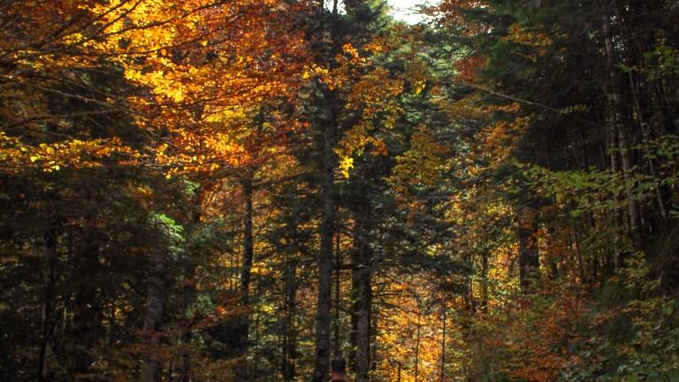 15 lugares preciosos a los que escaparse en otoño