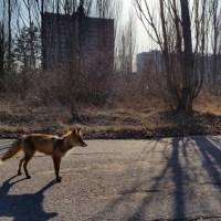 El Incidente de Chernobyl (II)