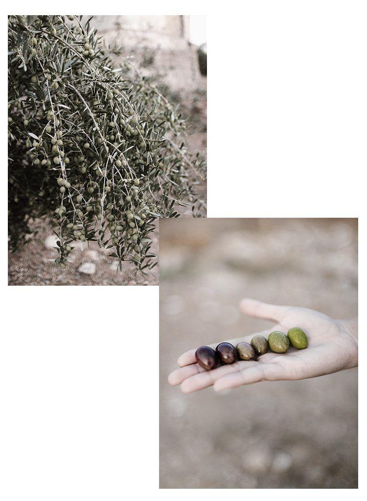 olivar 3
