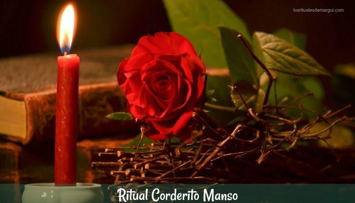Ritual para Amansar con Corderito Manso