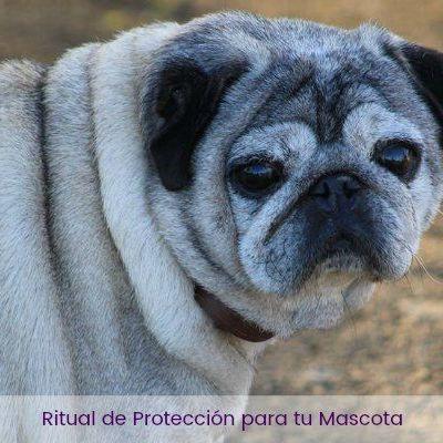Ritual de Protección para tu Mascota