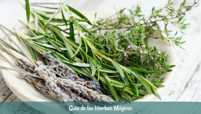 guia hierbas magicas