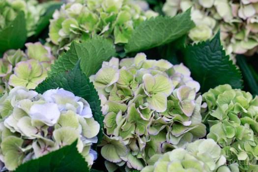 katten lossebloemen welke losse bloemen en planten zijn giftig en welke veilig voor katten