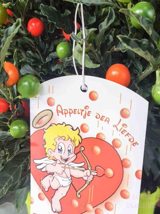 appeltje der liefde katten lossebloemen welke losse bloemen en planten zijn giftig en welke veilig voor katten