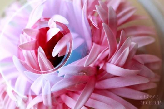 gerbera lgflowers germini roze gerbera lgflowers germini roze