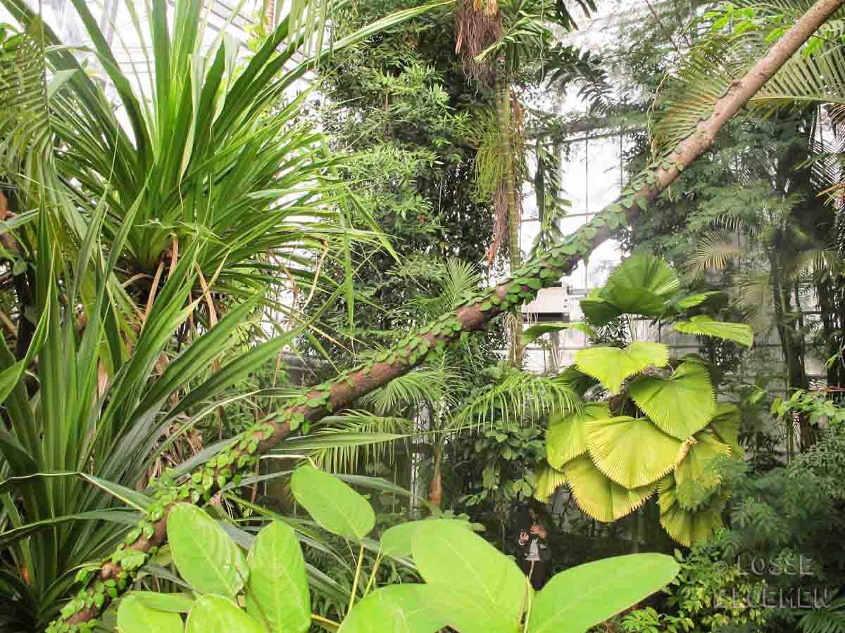 Botanische Tuin Amsterdam : Hotspot de hortus botanicus amsterdam botanische instaproof tuin