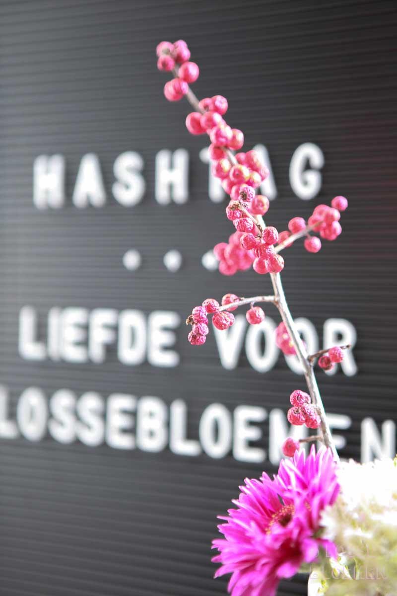 ILEX Bloemen en planten quotes voor op de llightbox of letterbord - lossebloemen.nl