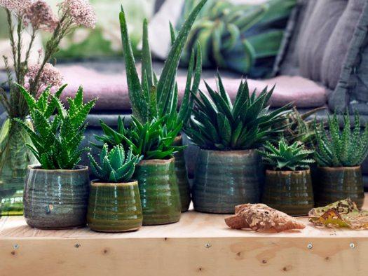 aloe-mooiwatplantendoen-beeld-lossebloemenblog - welke planten voor slaapkamer?