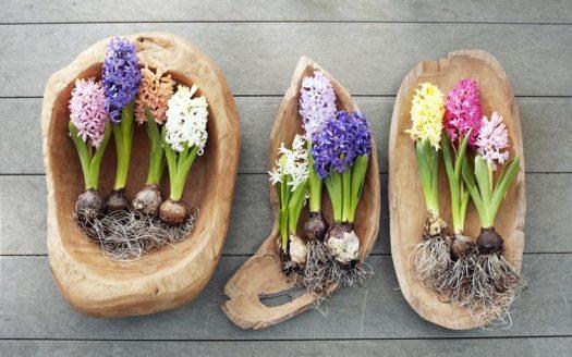 hyacint-hyacinten-mooiwatbloemendoen-beeld-blog-welke-bloemen-staan-voor-geluk-losse-bloemen-bolbloem-de-hyacting