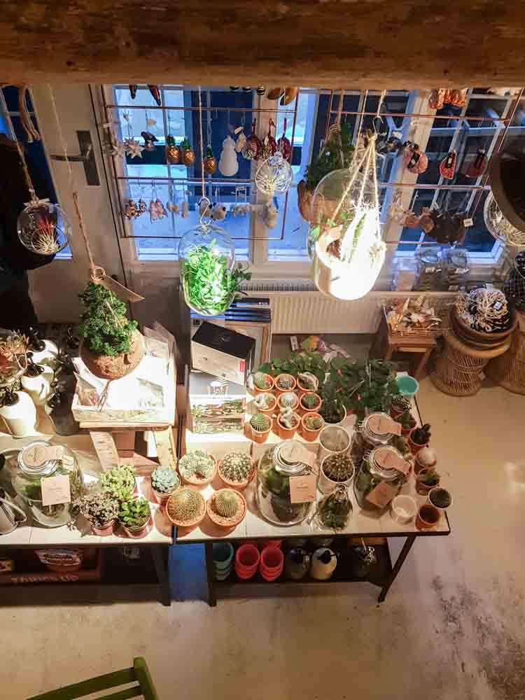 lossebloemen Kerstshoppen in hartje Utrecht losse bloemen it's a present winkel planten