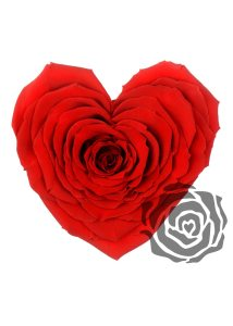 roseamor-hart-rood-rode-roos-preserved-roses-magische-beauty-and-the-beast-roos-losse-bloemen
