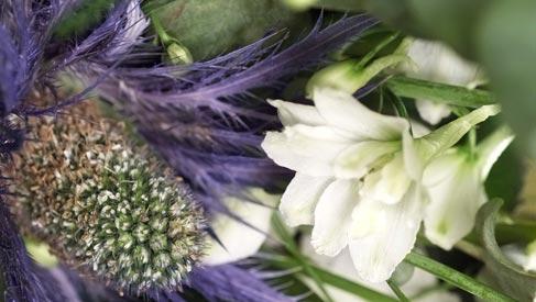 distel-beeld-mooiwatbloemendoen.nl-blauwe-bloemen