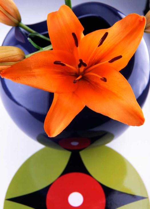 Oranje koningsdagbloemen foto- mooiwatbloemendoen.nl op losse bloemen blog Lelie