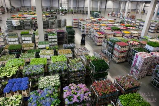 veiling plantion binnenkijker lossebloemen.nl bloemen blog