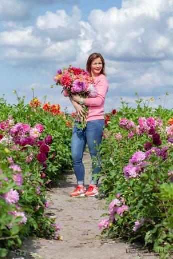 Dahliavelden Fam flowerfarm dahlia velden - foto's - lossebloemen