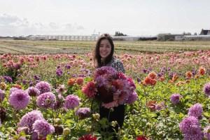 Famflowerfarm dahlia velden - foto's - lossebloemen-216