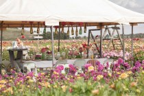 Famflowerfarm dahlia velden - foto's - lossebloemen-91