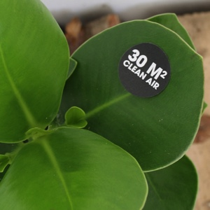 Ogreen luchtzuiverende planten