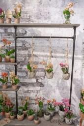 Little Kolibri orchis - OKPLANT Lossebloemen trade fair Royalfloaholland Aalsmeer 9 nov 2018 - bloemenblog lossebloemen.nl