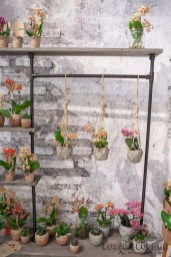 Little Kolibri orchis - OKPLANT Lossebloemen trade fair Royalfloaholland Aalsmeer 9 nov 2018 - bloemenblog lossebloemen.nl