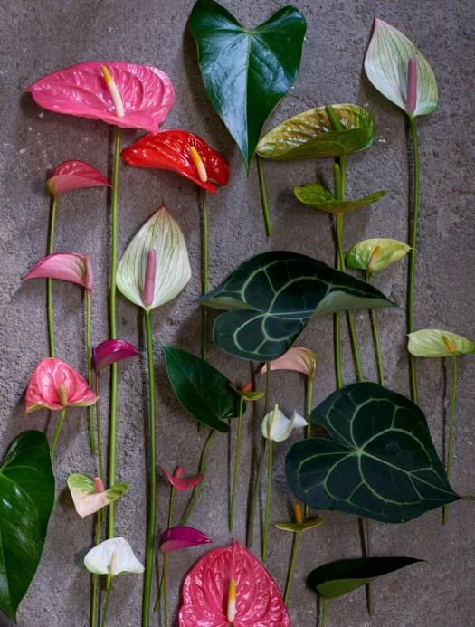 Anthurium flamingobloem kleurrijk losse bloemen beeld: mooiwatplantendoen.nl