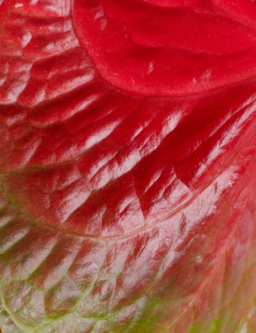 Anthurium snijbloem close up beeld: mooiwatbloemendoen.nl