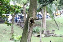 Parque Paitilla
