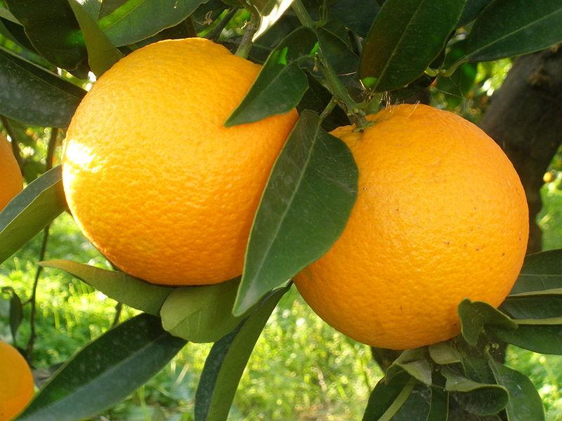 Riberella l'arancia bella...e buona ⋆