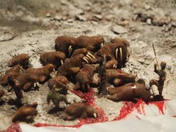 Walrus killing