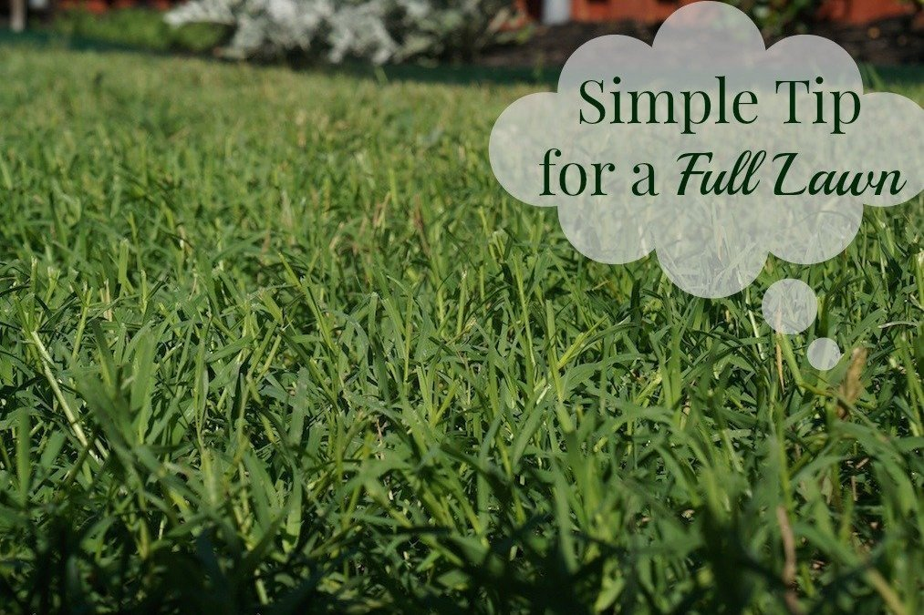 Simple Tip for Bare Spots in Your Lawn