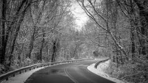 curvy snow road with trees