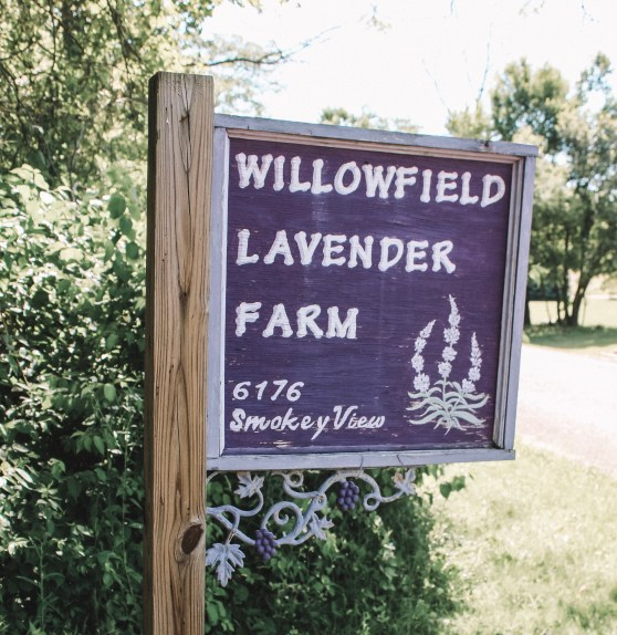 Willowfield Lavender Farm – Lost Between the Pages