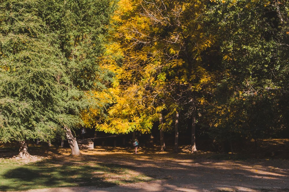 Girl stands beneath gold colored trees in Krka National Park Croatia. Photo taken with Canon 650D Rebel T4i, edited in Lightroom. Get the free Krka lightroom preset with cool highlights, warm shadows, and a gentle fade.