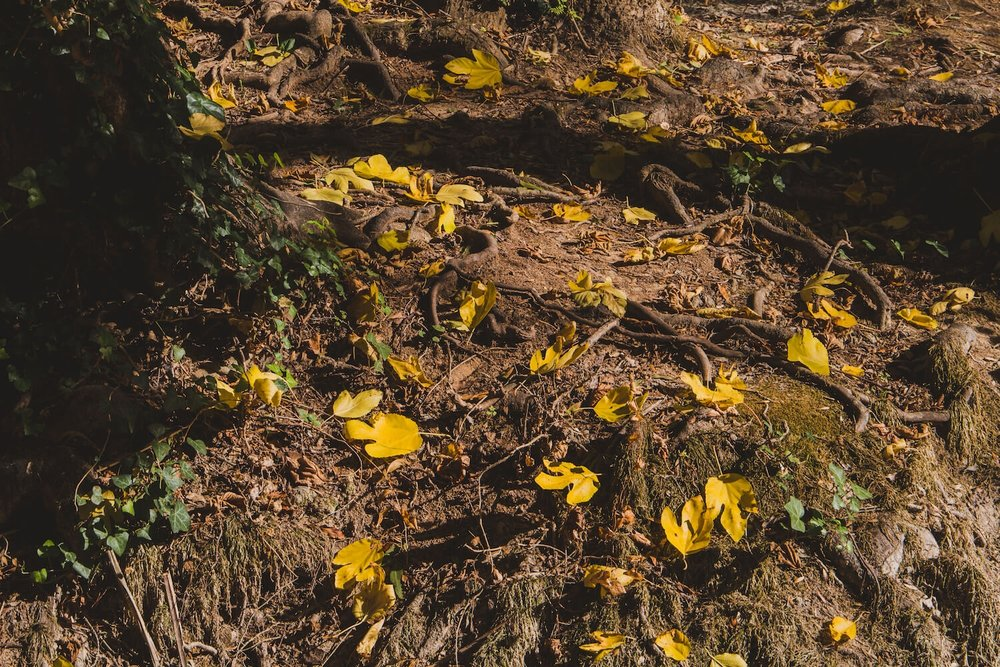 Golden leaves on the ground in Krka National Park Croatia. Photo taken with Canon 650D Rebel T4i, edited in Lightroom. Get the free Krka lightroom preset with cool highlights, warm shadows, and a gentle fade.