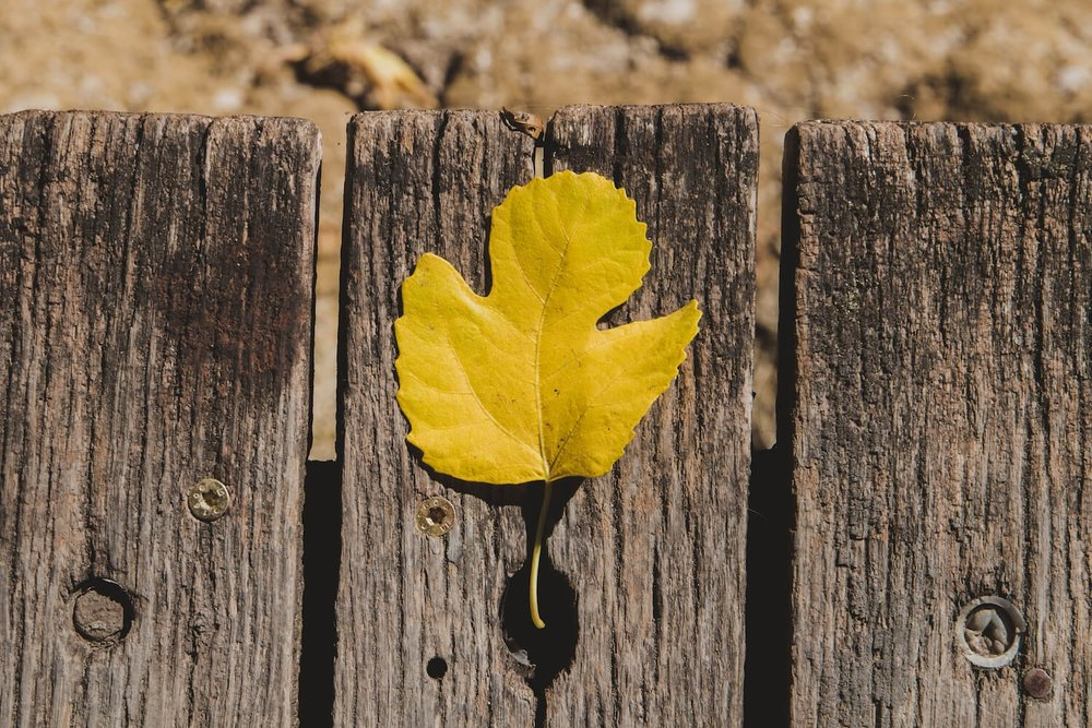 Yellow leaf on an old wooden pier in Krka National Park in Croatia in Autumn. Photo taken with Canon 650D Rebel T4i, edited in Lightroom. Get the free Krka lightroom preset with cool highlights, warm shadows, and a gentle fade.