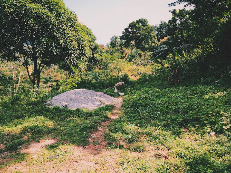 A sheep and baby lamp grazing in the jungle near Camp Perrin Haiti.