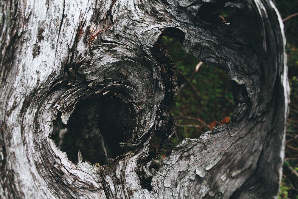 Photo of Gros Morne Nation Park in northeastern Canada. A close up of a decaying tree, rotten and dried and white, looking through at cracks and patterns.