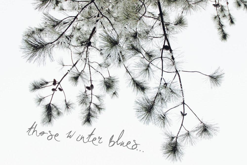 winter-blues-pine-trees.jpg