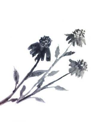 drawingconeflower
