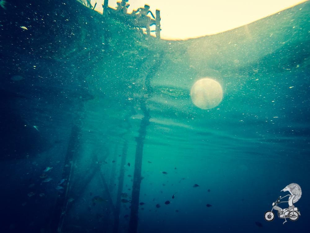 Underwater view.