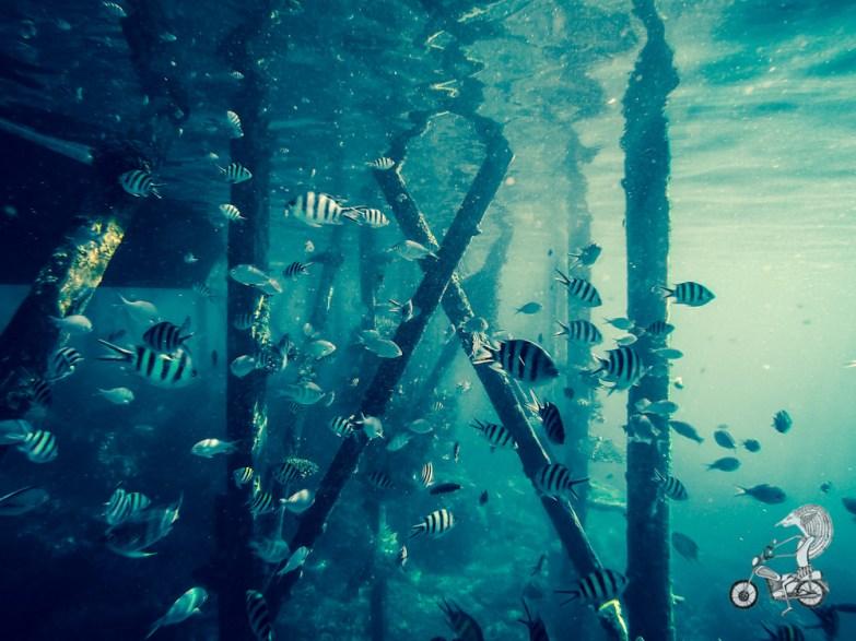 Snorkeling.
