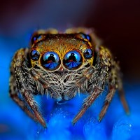 Eye of the Spider: Eight Exotic Eyes Staring Into Your Soul