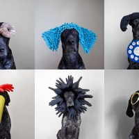 Laugh Out Loud Portraits of Costumed Canine