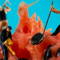 Miniature Worlds Birthed from the Mind of Tanaka Tatsuya