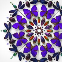 Designer Creates Incredible Mosaics Using a Rainbow of Insects