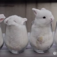 Cuteness Overload: Bunnies in Cups