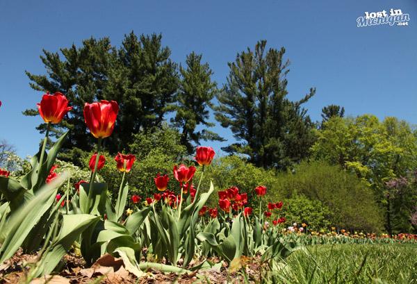 dow gardens Midland Michigan