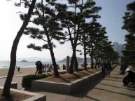 South korea 311 (2)